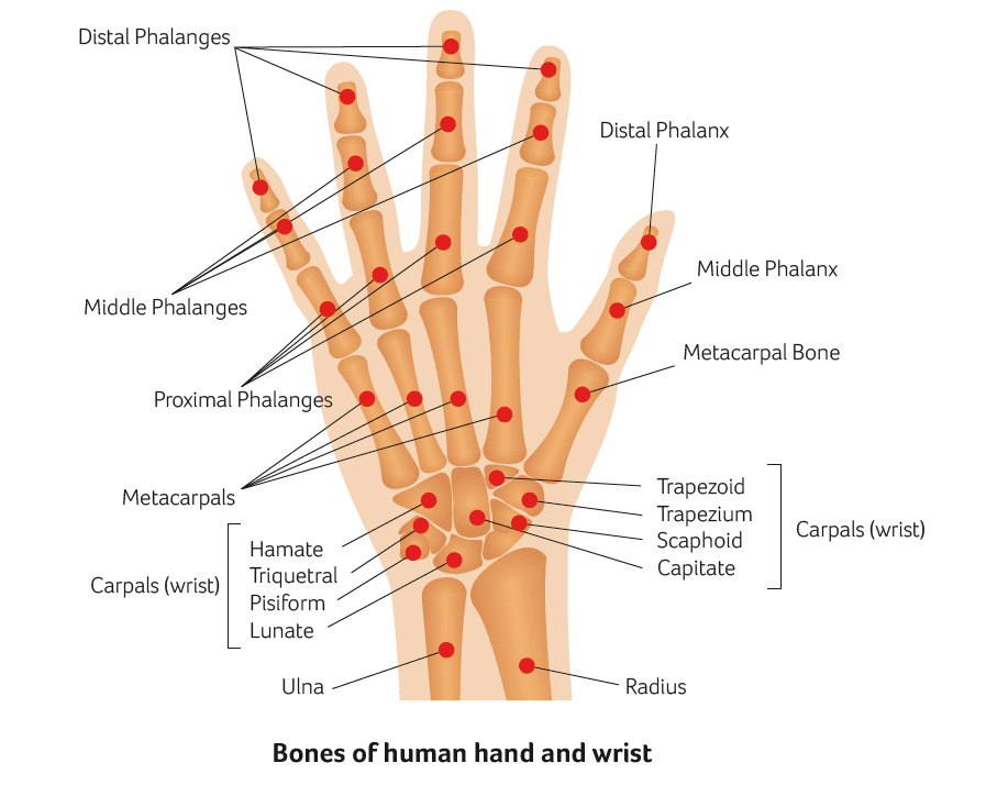 Hand and wrist injuries and surgery